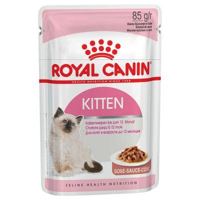 Royal Canin Kitten in Soße