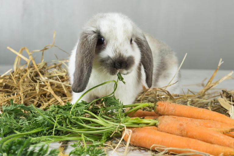 Viljatonta ruokaa pieneläimille