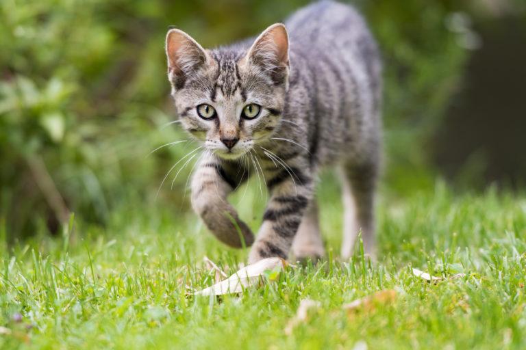 Kissan ulkotarha