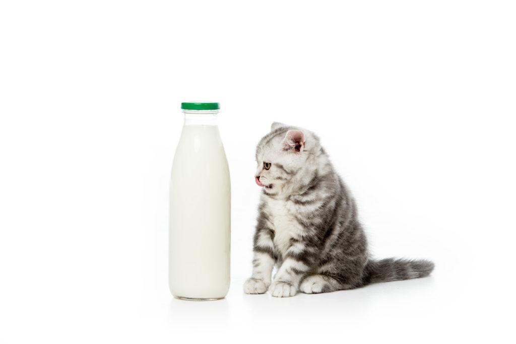 Γάλα γάτας