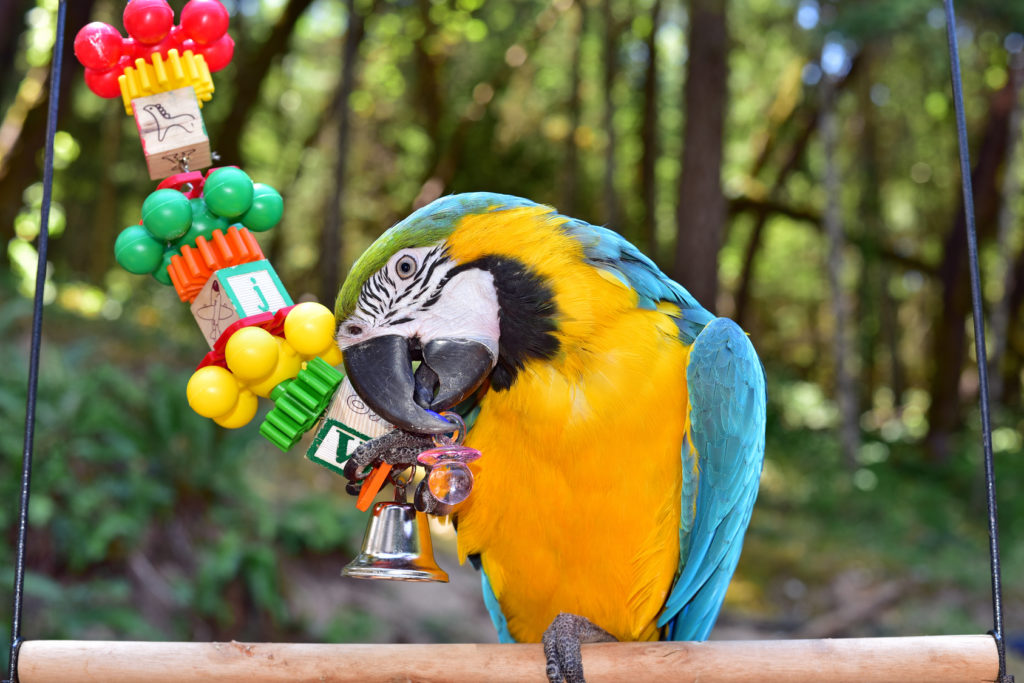 papageienspielzeug