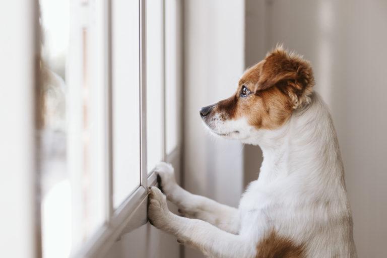 Koiranpennun yksinolo