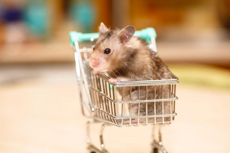Mitä valita ostoskoriin pikkujyrsijää varten