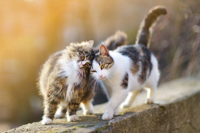 Kissat keskenään
