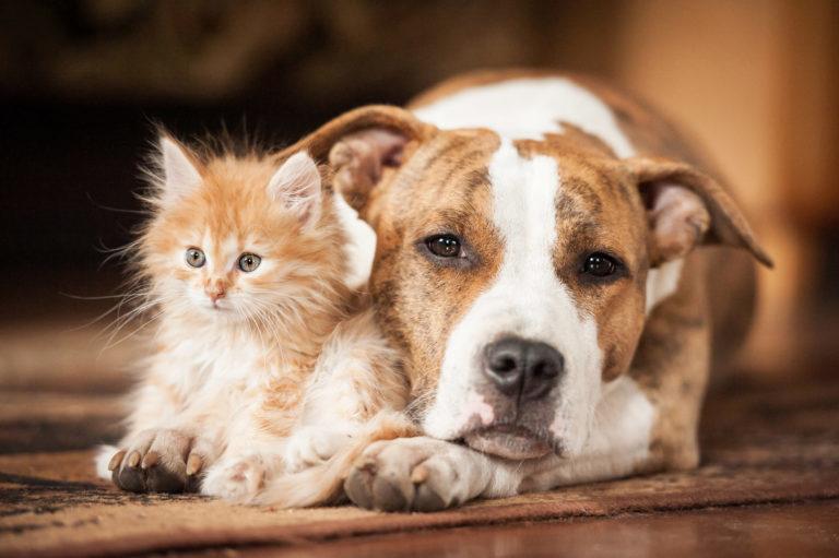 kissa ja koira yhdessä