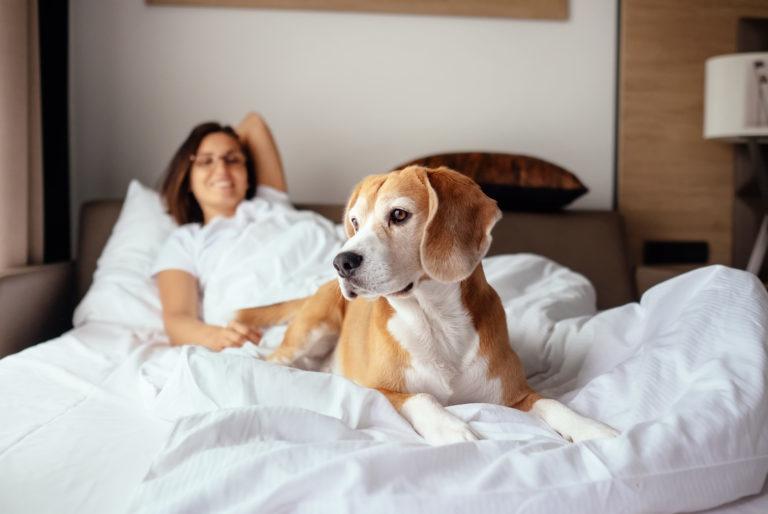 Saako koira nukkua sängyssäni?