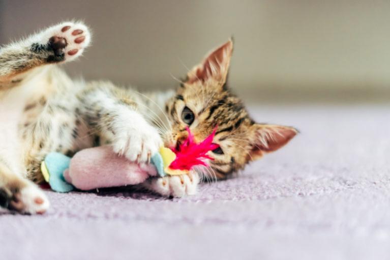 kissan leikkiminen