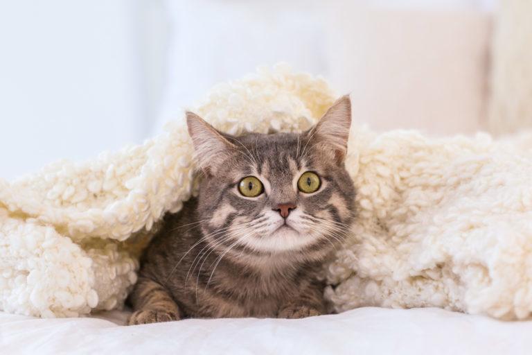 Kissani pelkää ilotulituksia