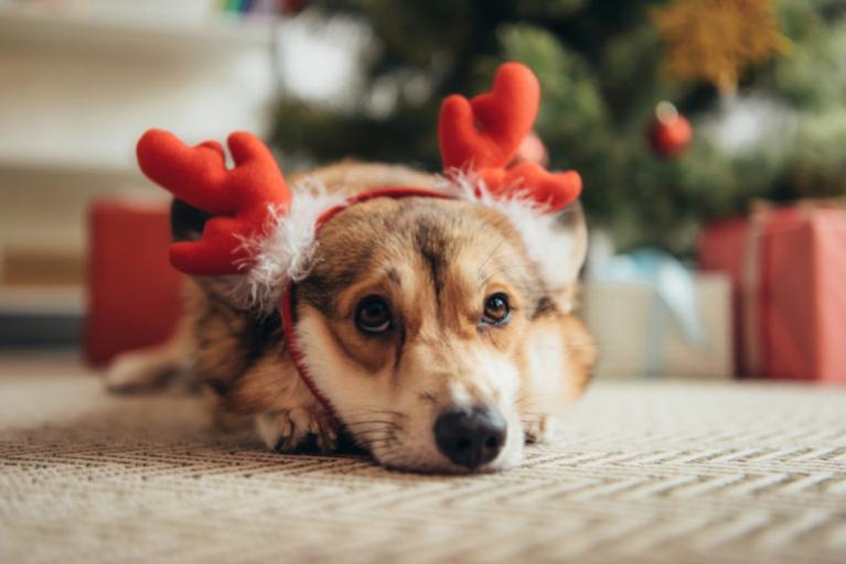 joulu koiran kanssa