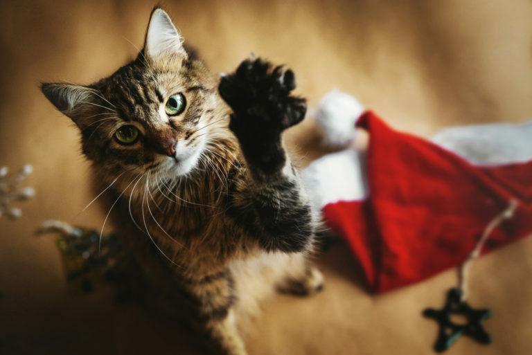 turvallinen joulu kissan kanssa