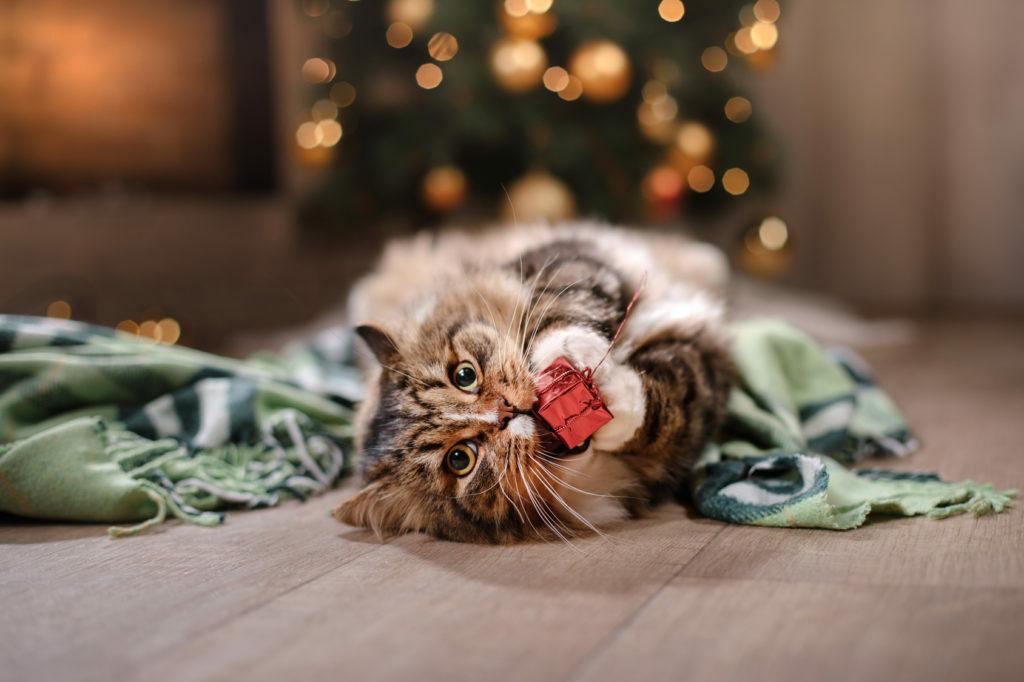 kissa leikkii joulukoristeella