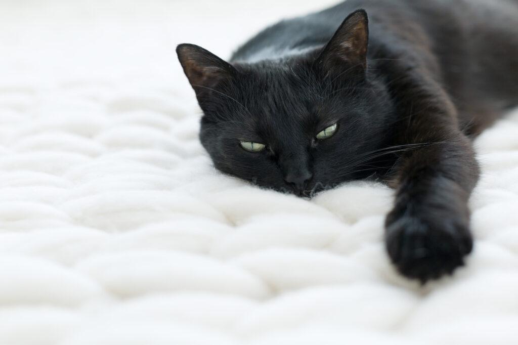 Kissan hengitystieongelmat