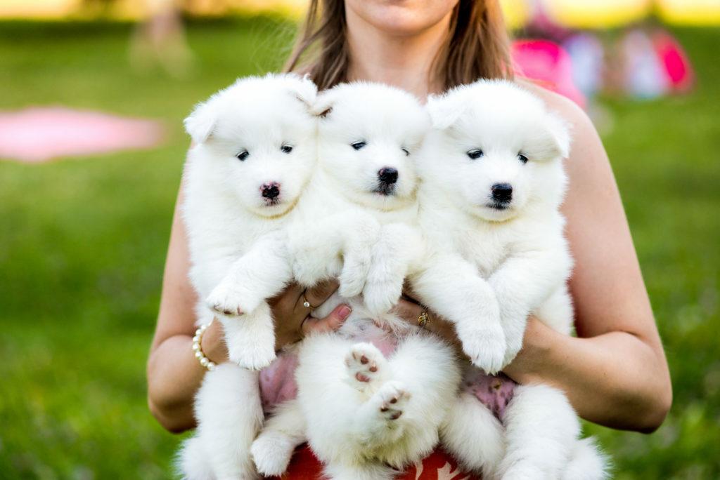 Koiranpennun ostaminen