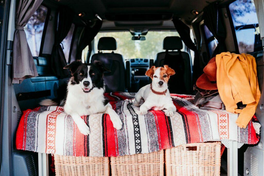 Koiran kanssa telttailu