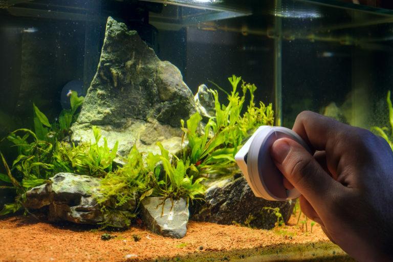 Tupsulevät akvaariossa