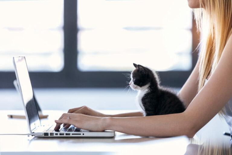Nainen työskentelee kissa sylissään