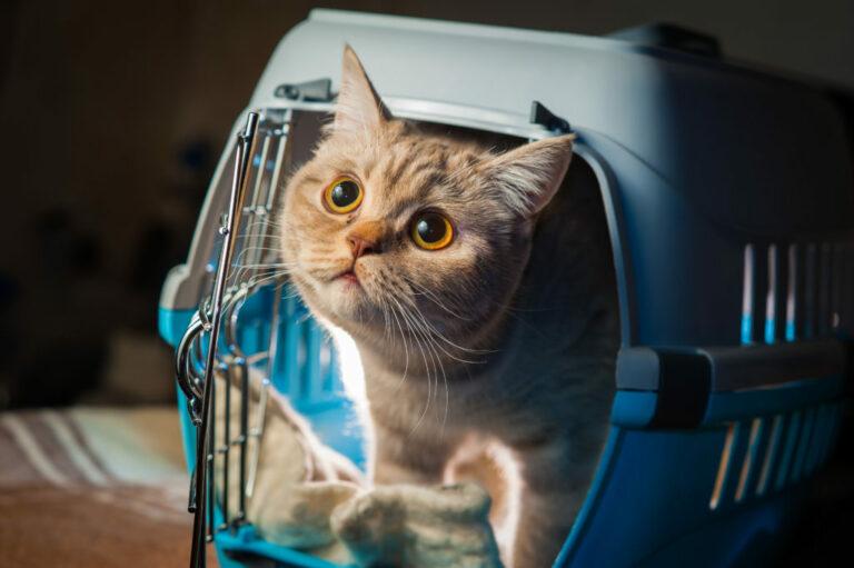 Kissan kanssa matkustaminen