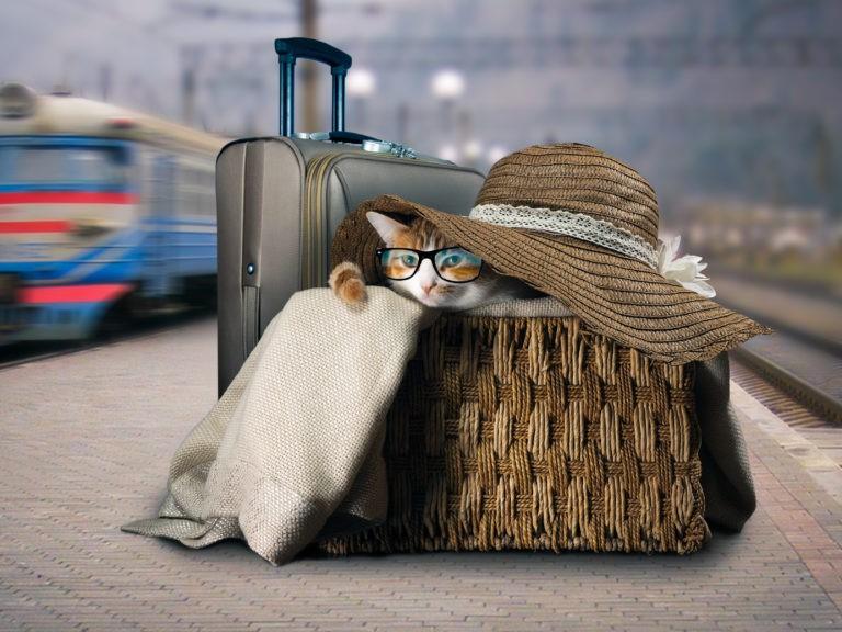 kissan kanssa junassa