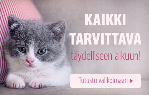 Kitten_general
