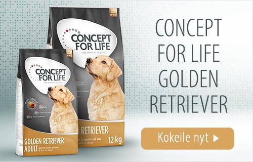 CFL_golden_retriever