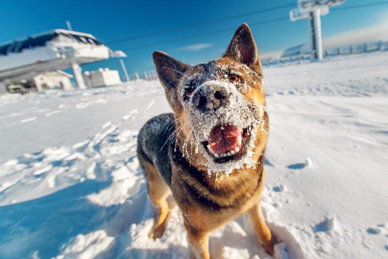 Koirat talvella