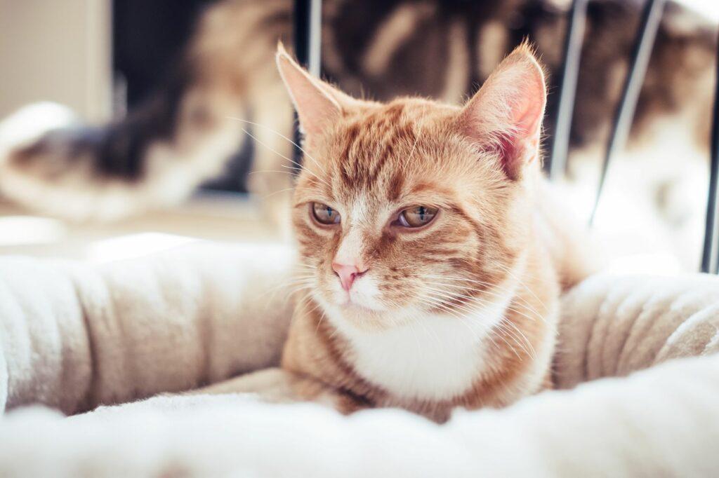 Ystävänpäivän lahjaideat kissalle