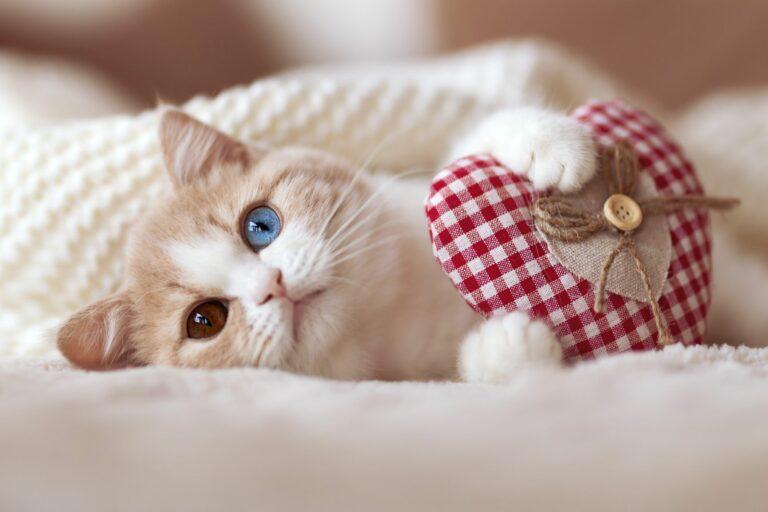 Ystävänpäivän lahjaideoita kissalle
