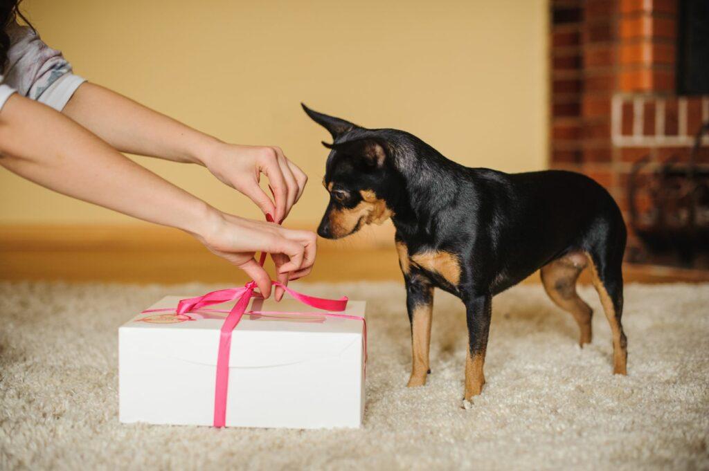 Ystävänpäivä koiran kanssa