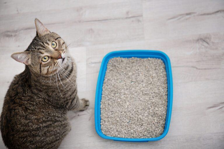 Kissa kissanhiekkalaatikolla
