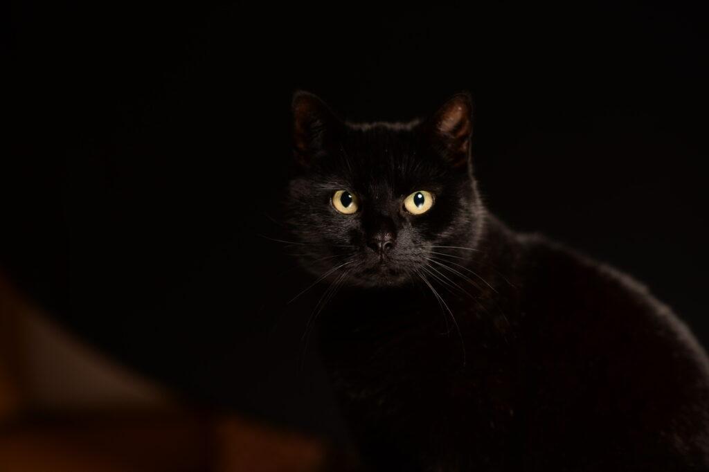Musta kissa mustalla taustalla