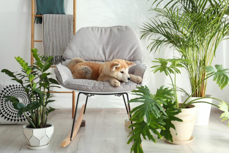 Koiralle vaaralliset kasvit