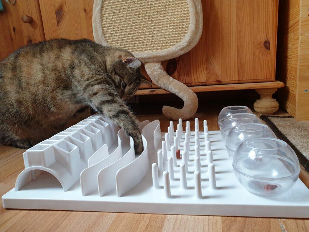 kissan liikunta aktivointipelin avulla