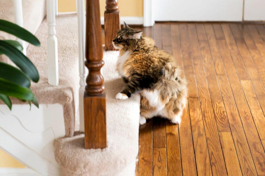 kissa kiipeämässä portaita
