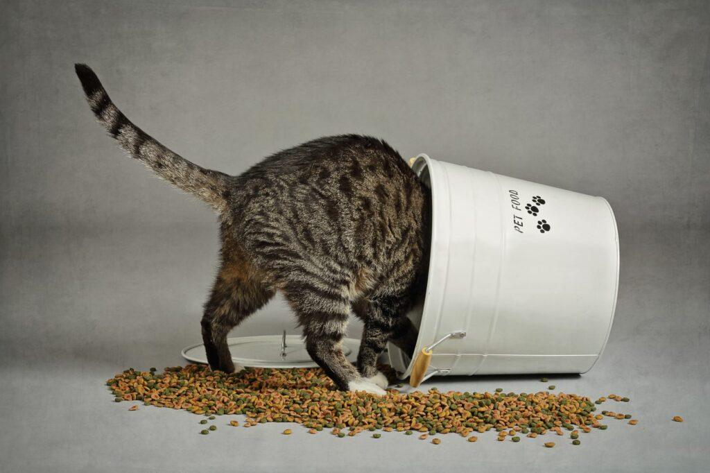kissan ylipainon syyt ja seuraukset