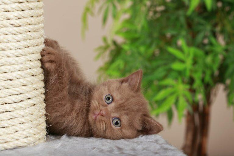 DIY kissan kiipeilypuu