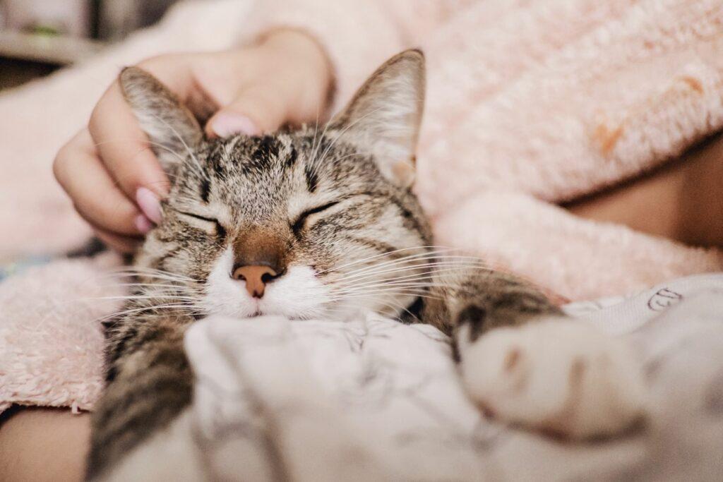 Kissan äänet kehräys