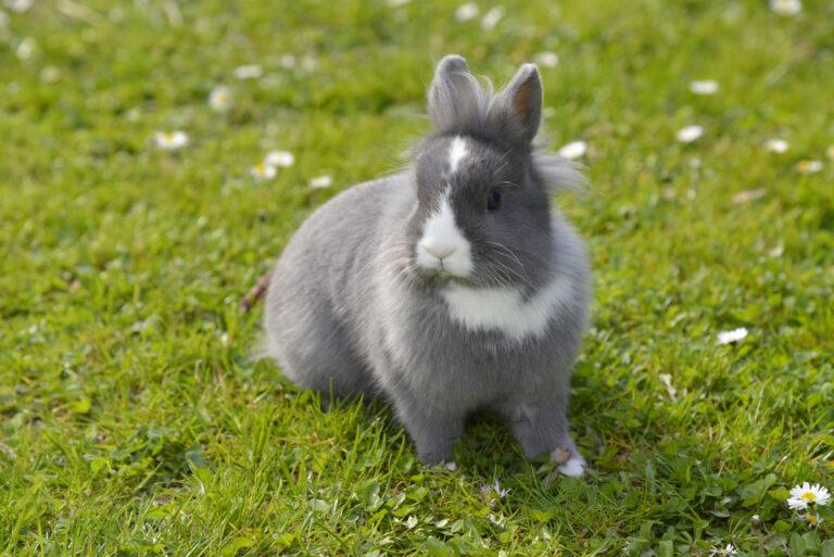 harmaa kani ruohikolla