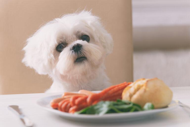 Mitä koira ei saa syödä?