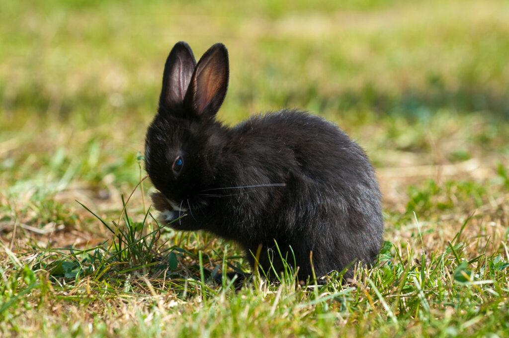 musta kani