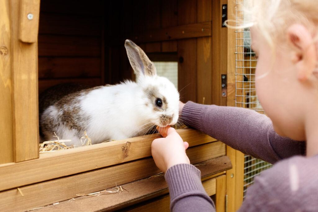tyttö ja kani
